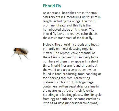 Bekford - Pest Control