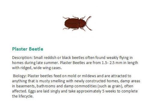 Bekford Pest Control